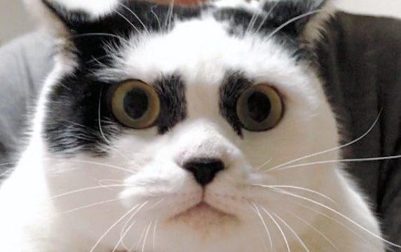 宮崎県 歌舞伎ネコ 正体 捨てネコ 保護猫カフェ うたたね