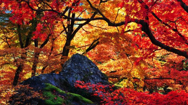秋分の日 意味 簡単 わかりやすく 解説 2019年度版